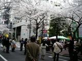 YaesuSakura_20080328_3.jpg