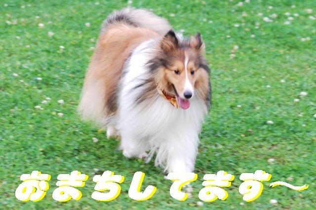 DSC_24310-1.jpg