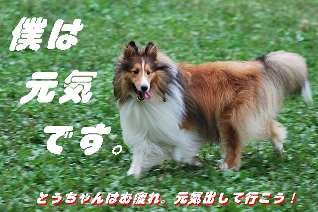 DSC_250400-11.jpg