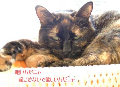 20080406_5.jpg