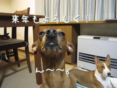 IMG_1529_convert_20091231205423.jpg