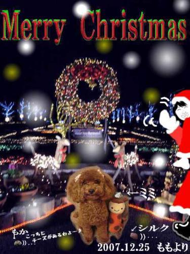 2007クリスマスカード.ペットブログ用JPG