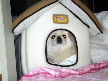 窮屈なハウス