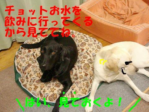20071004171938.jpg