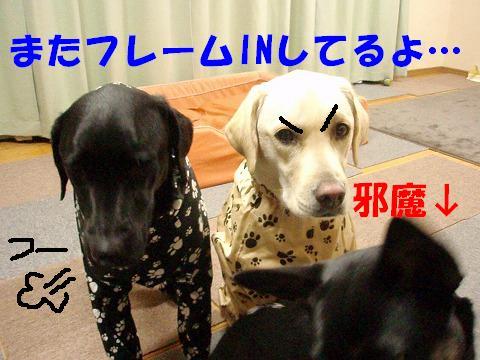 20071120114930.jpg