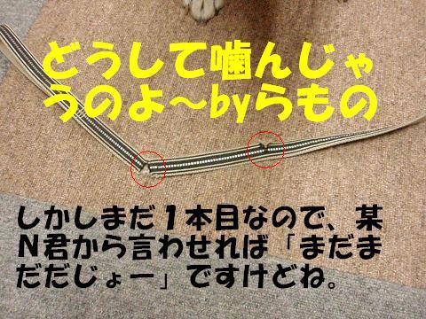 20071130113900.jpg