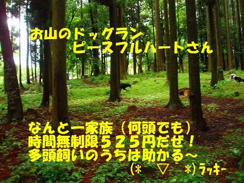 s-ラブモモ 061