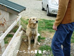 ゴーシュの看板犬