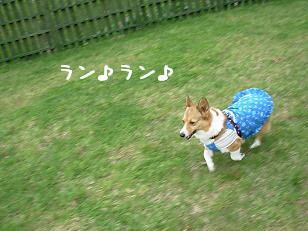 花七曜ドッグラン杏2