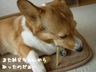 ガムくわえ杏(文字)