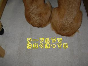 テーブル下紋&杏