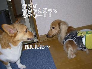 杏&QOO