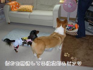 紋次郎&ピアリ2