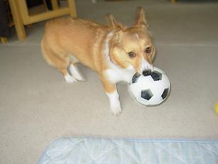 サッカーボールと杏2