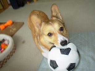 サッカーボールと杏3