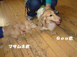 6.28Qoo君&マサムネ君