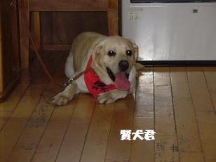 6.28賢犬