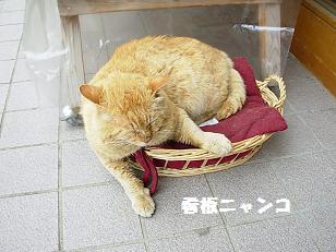 売店看板猫