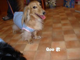 ワンダフル Qoo