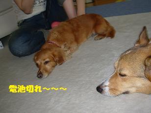 杏とおでこ
