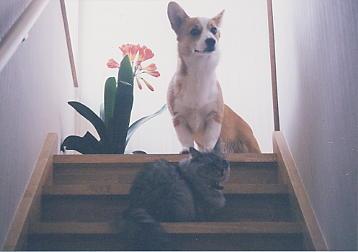 紋次郎とママ猫