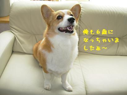 6歳誕生日紋次郎