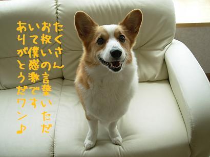 紋兄お礼2