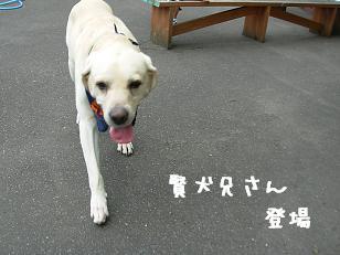 8.17賢犬