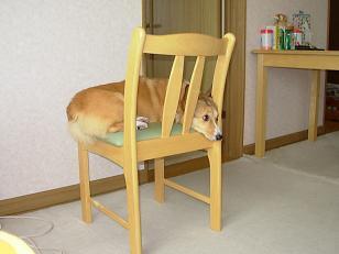 食卓椅子2
