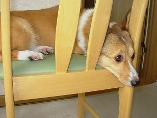 食卓椅子3