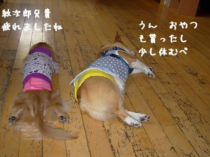 おねんね紋&QOO