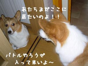 廊下杏と紋次郎