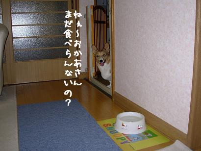 ケーキ待ち杏