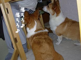 テーブル下紋&杏3