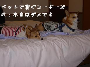 お部屋で紋兄&杏