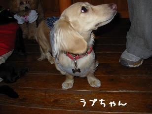 10.25ラブちゃん