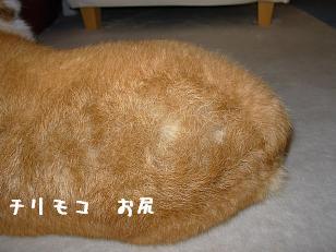 シャンプー後 杏(お尻)