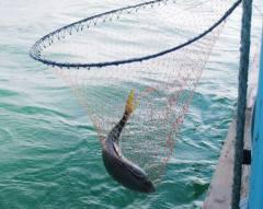 メジロ釣り-4