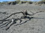 ビーチに落ちている枯れ木