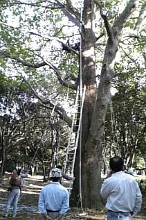 木登り教室
