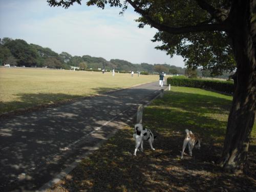 土手を散歩7