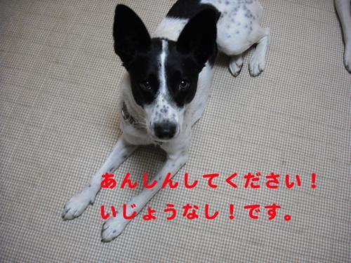 番犬5のコピー
