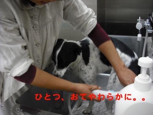 洗濯2のコピー