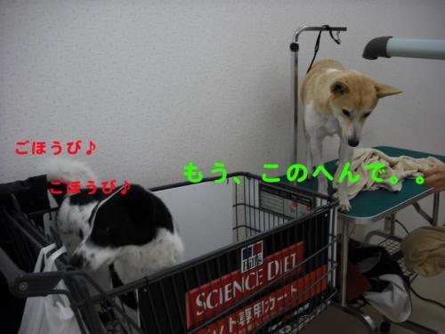 洗濯16のコピー