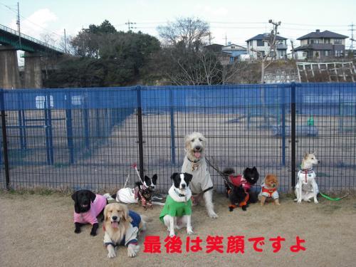 モデル犬のコピー