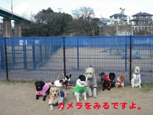 モデル犬2のコピー