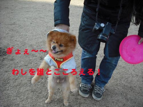 モデル犬5のコピー