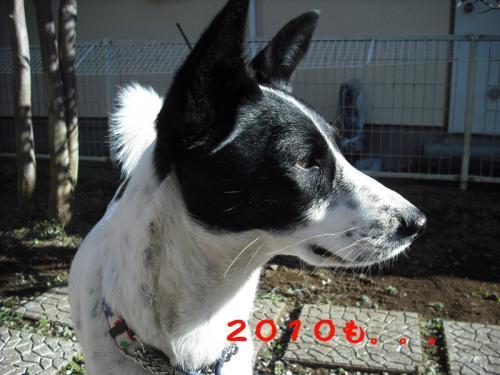 迎春2010-2のコピー