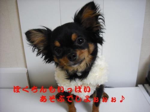 迎春2010-6のコピー