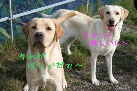20071101181021.jpg